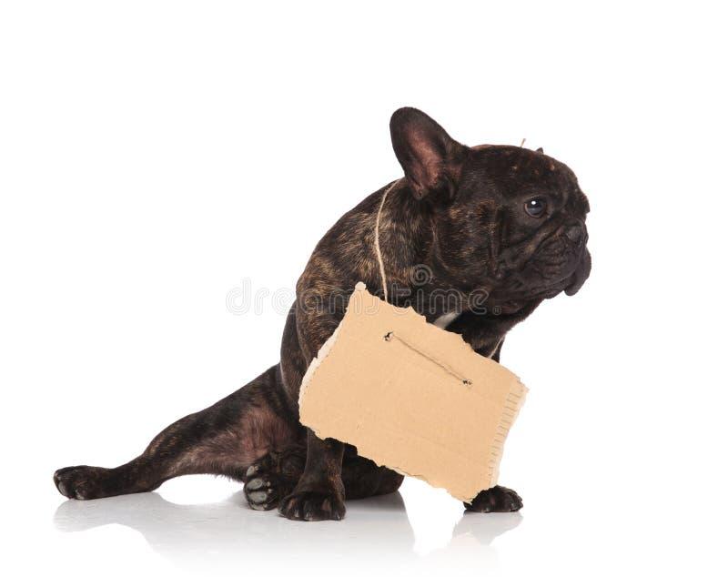 可爱的支持的叫化子法国bullsog佩带的纸盒标志神色 库存照片