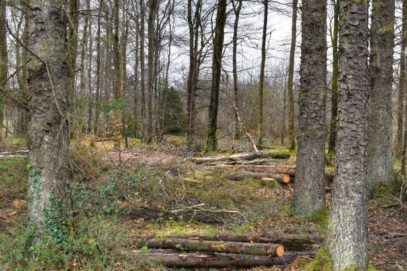 可爱的步行在森林里 免版税图库摄影