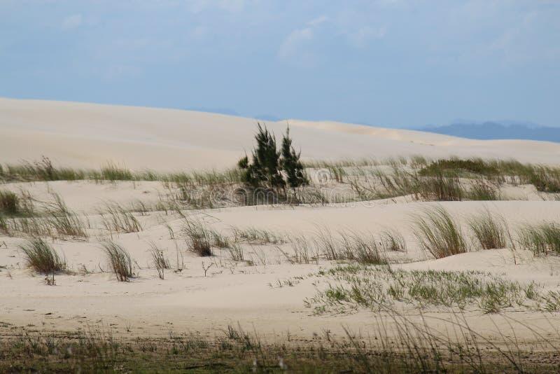 可爱的沙漠视图在南美 免版税库存照片