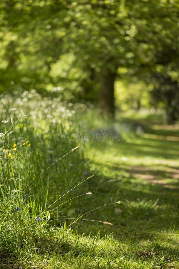 可爱的浅景深英国森林新风景  免版税库存照片