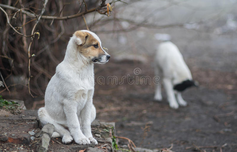 可爱的混杂的品种小狗充分的身体画象  图库摄影