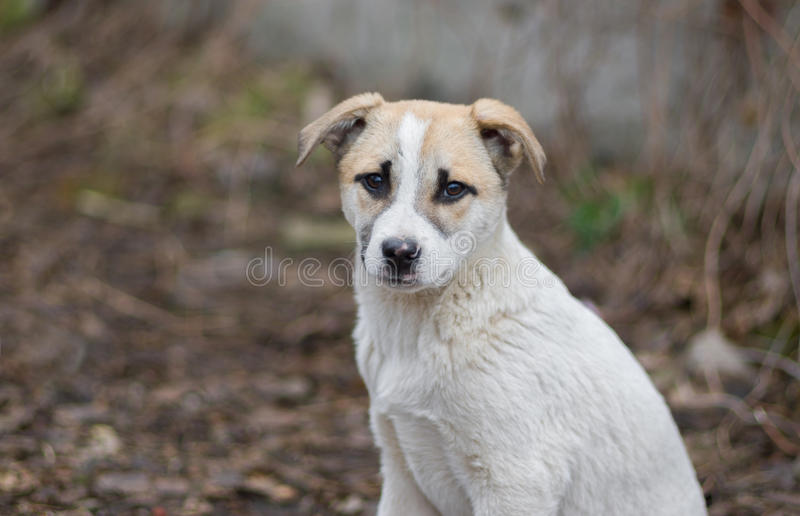 可爱的混杂的品种小狗画象  库存图片