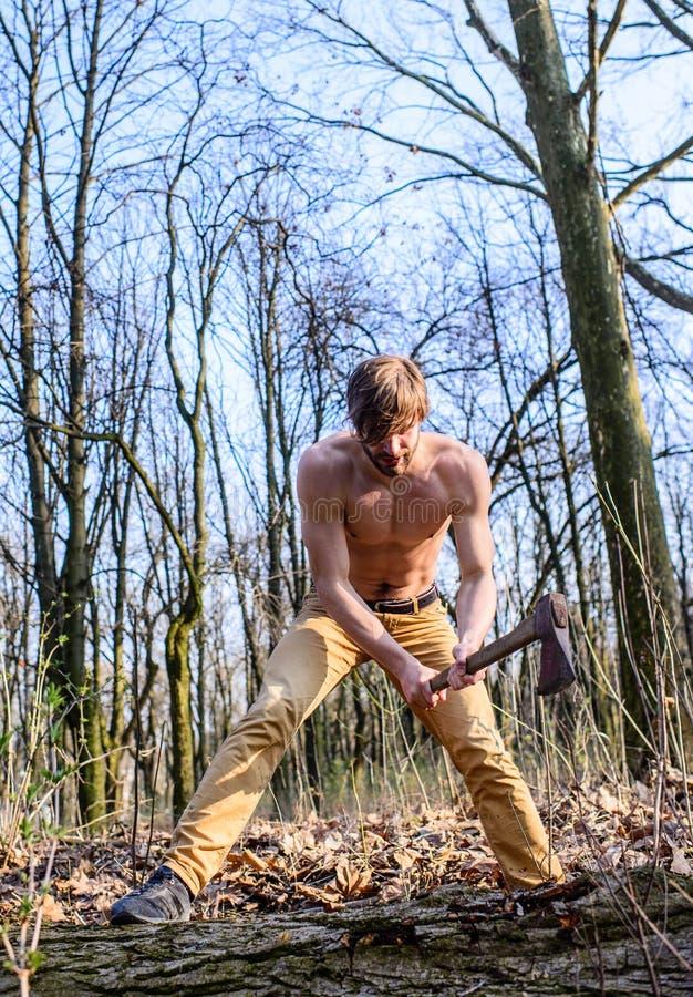 可爱的猎场看手人 会集木头的伐木工人樵夫性感的赤裸肌肉躯干 人残酷有吸引力人收集 免版税库存照片