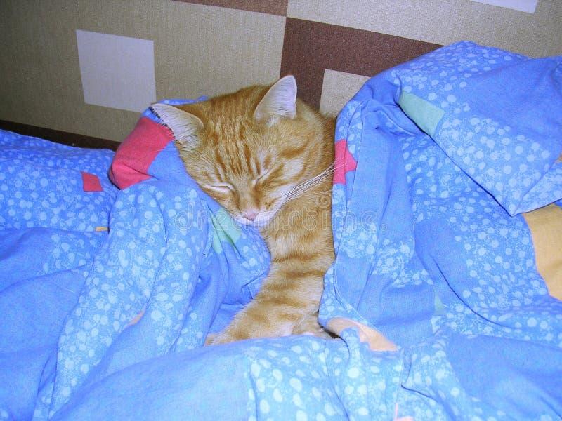 可爱的猫儿子 库存照片