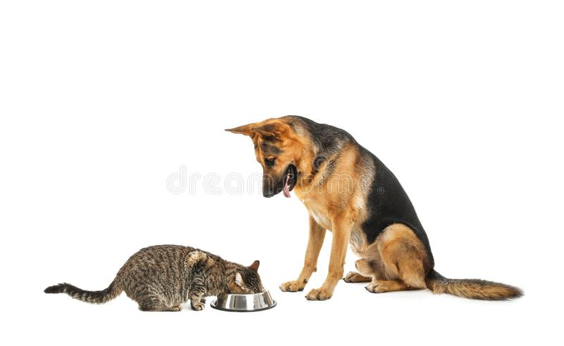 可爱的猫和狗在碗食物附近 图库摄影