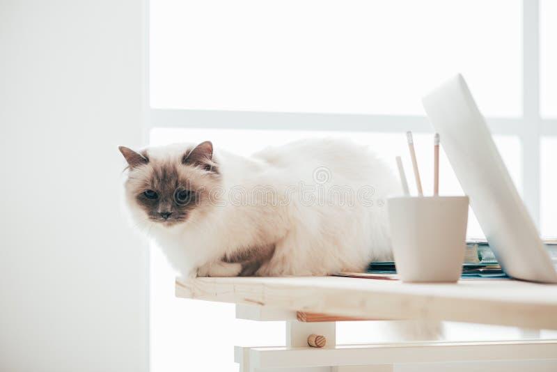 可爱的猫坐书桌 库存照片