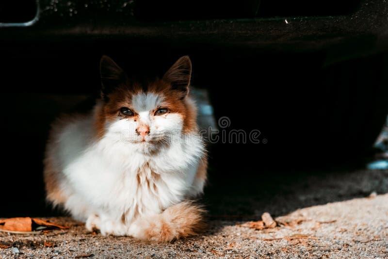 可爱的猫掩藏在汽车下 图库摄影