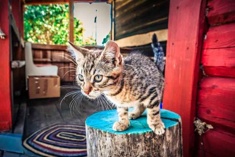 可爱的猫,小小猫 库存照片