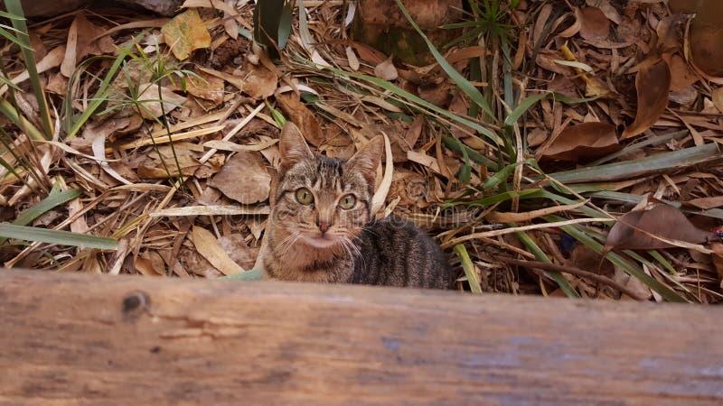 可爱的猫 库存照片