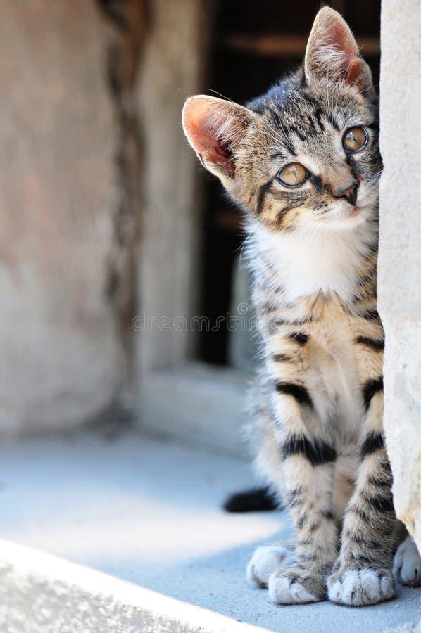 可爱的猫 免版税库存照片