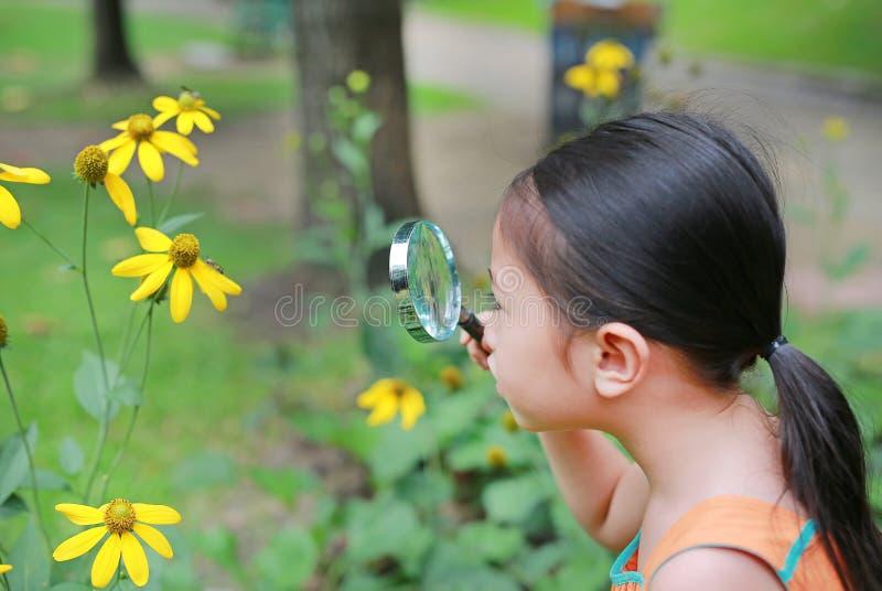 可爱的矮小的亚洲儿童女孩探险家美丽的开花黄色花在夏天庭院里 作为研究员的特写镜头自然 库存图片