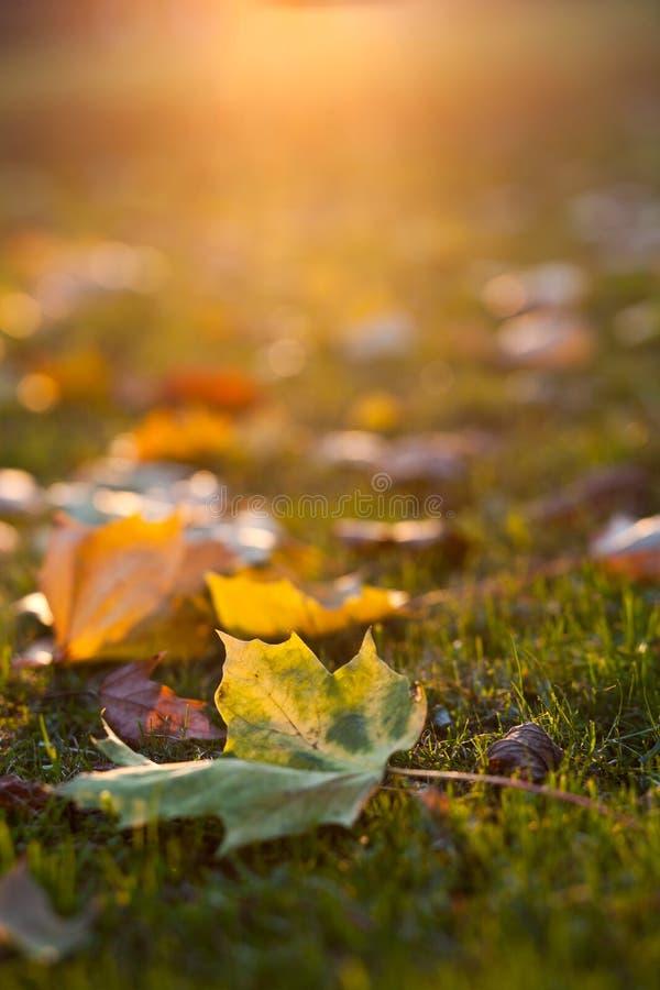 可爱的秋叶 免版税库存照片
