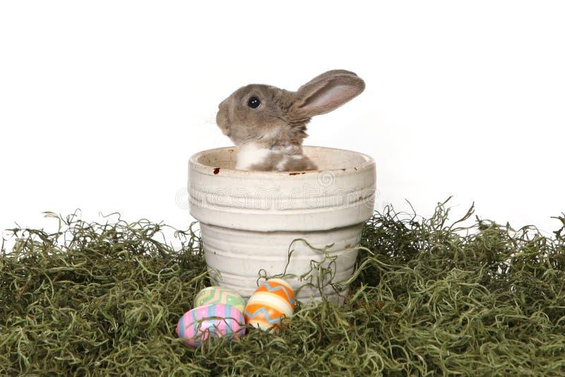 可爱的背景兔宝宝panter白色 库存照片