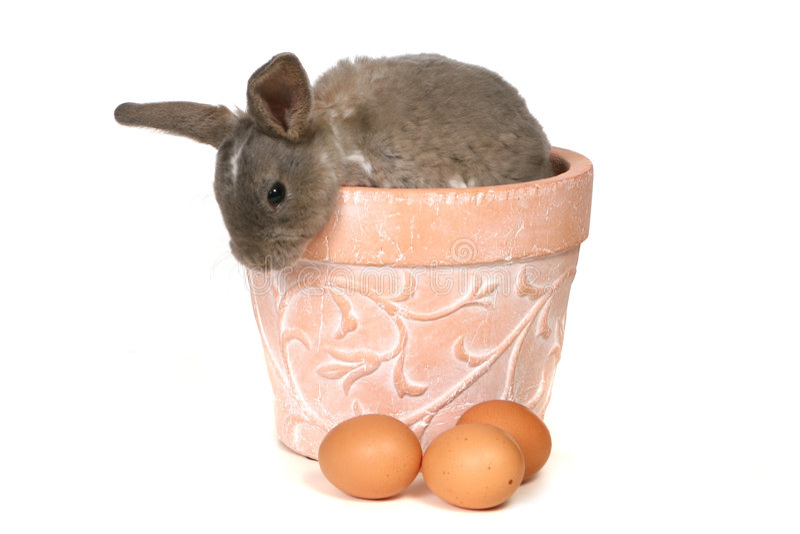 可爱的背景兔宝宝peekin白色 库存照片