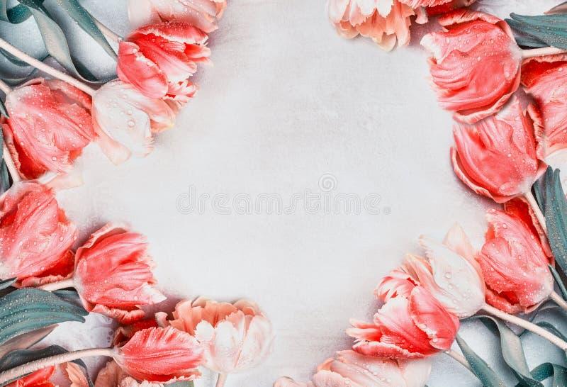 可爱的郁金香框架,春天花 图库摄影