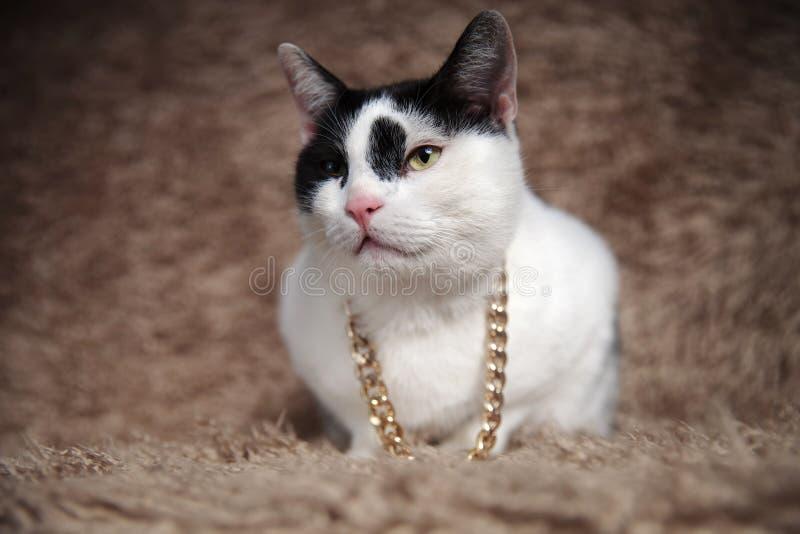 可爱的黑白支持的猫佩带的金衣领神色 免版税库存图片