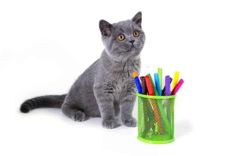可爱,灰色,模糊的英国小猫在与笔的一块玻璃旁边,坐白色背景 欢迎到学校 库存图片
