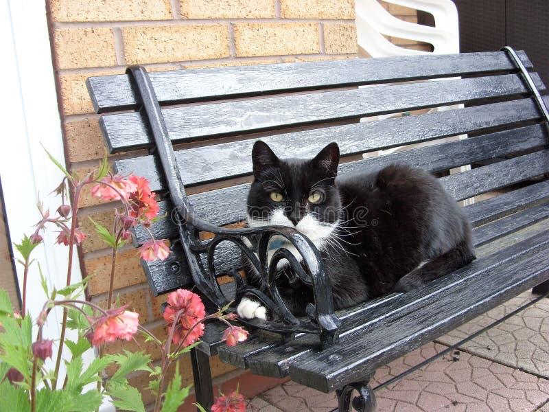 可疑凝视从庭院长凳的黑&白色猫 库存图片