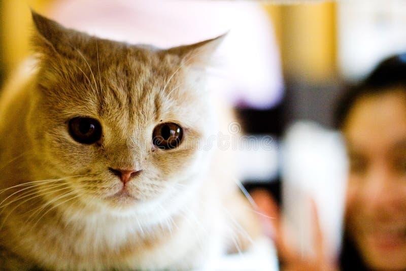 可疑的猫 免版税库存照片
