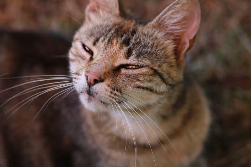 可疑的猫 免版税库存图片