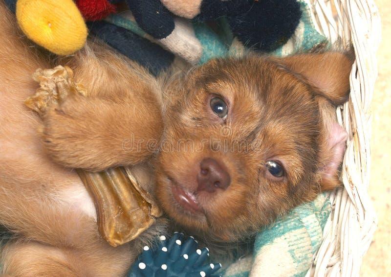 可笑的小狗 图库摄影