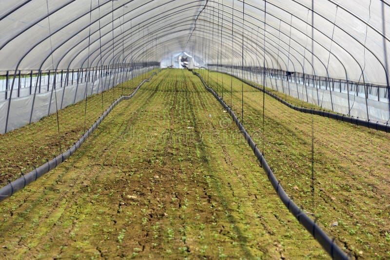 可耕的背景地球好地产耕了 免版税库存照片
