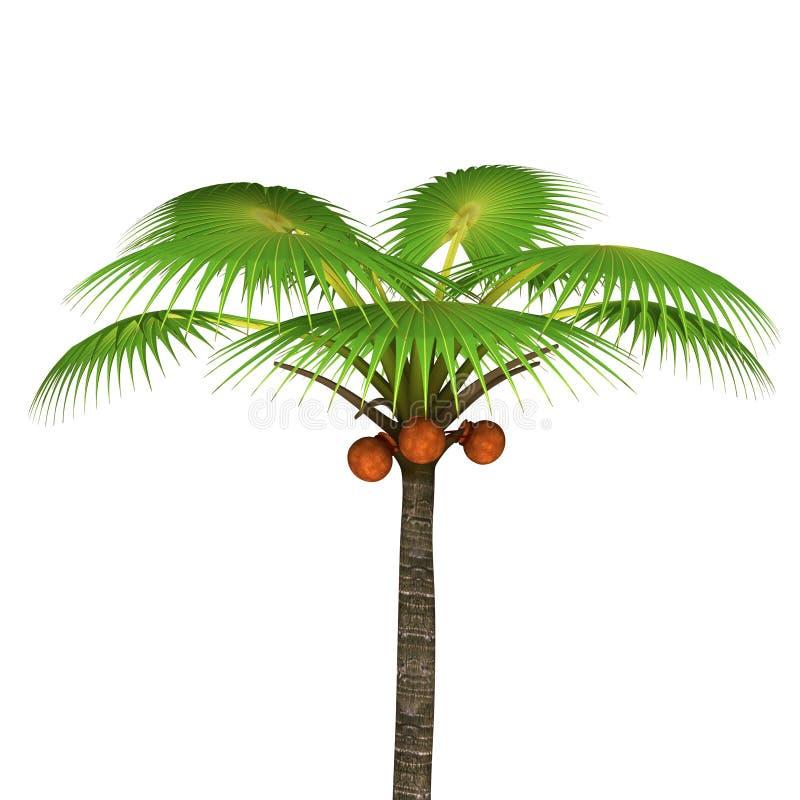 可西嘉岛海岛地中海掌上型计算机摄影被采取的结构树 向量例证