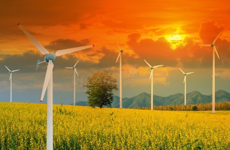 可选择能源的风轮机在猪屎豆属的黄色花田与电源杆和光的发光日落 免版税库存照片