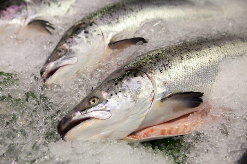 台湾` s著名水生市场,在主角水生产品,吃seafoodï ¼ Œï ¼ Œ 免版税库存照片
