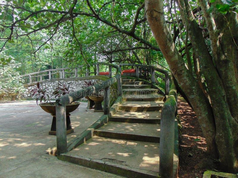 台阶在森林里 免版税库存照片