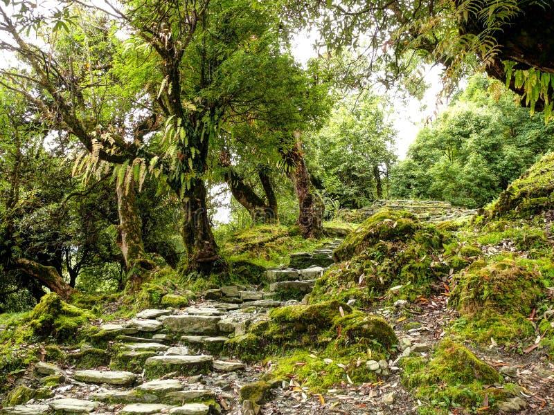 台阶在老森林里 库存图片