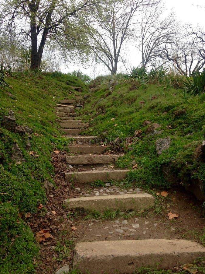 台阶在Kyiv植物园里 库存照片