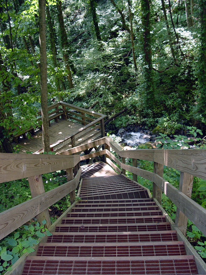 台阶森林 库存图片