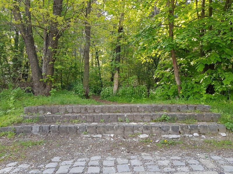 台阶的照片在森林,Vodno 库存照片