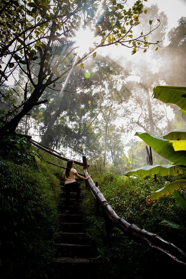 台阶的美女在清迈& x28的一条有雾和湿雨林道路;泰国 库存照片