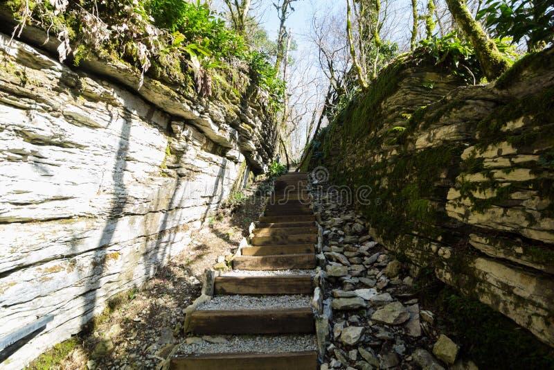 台阶赤柏松和黄杨木潜叶虫树丛 库存图片