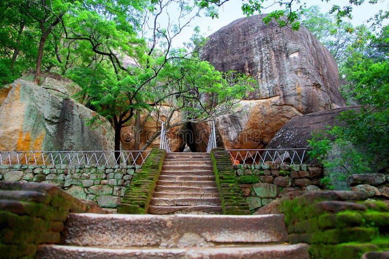 台阶通过树到巨型岩石开头里向锡吉里耶在斯里兰卡 库存照片