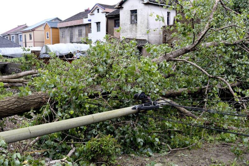 台风吹倒树和电线杆,等待的修理 库存图片