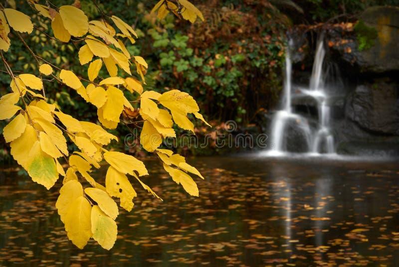 史丹利公园池塘 免版税库存照片