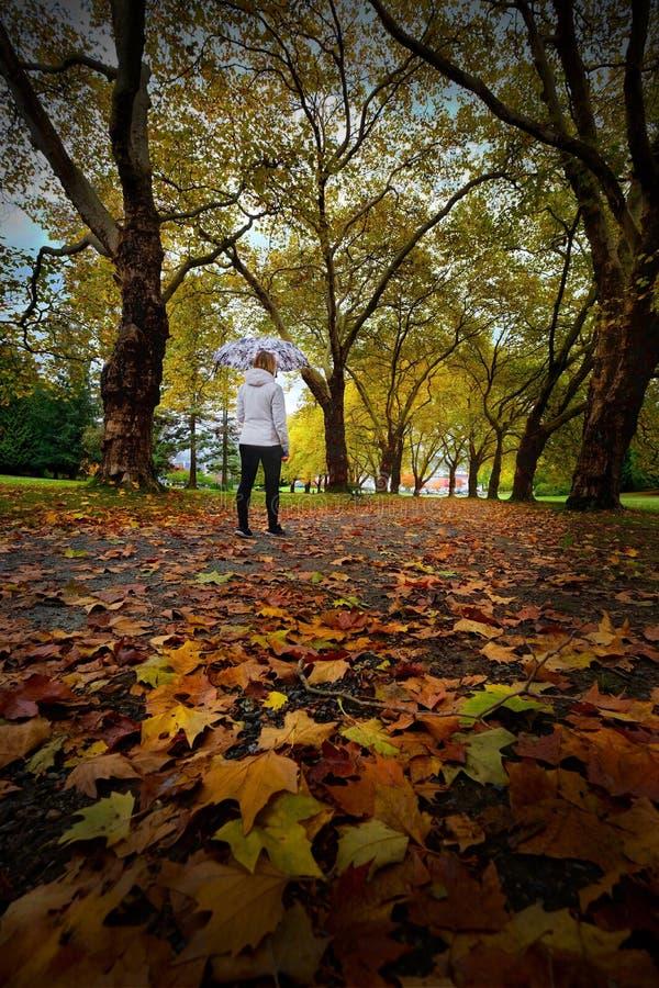 史丹利公园自然步行 图库摄影