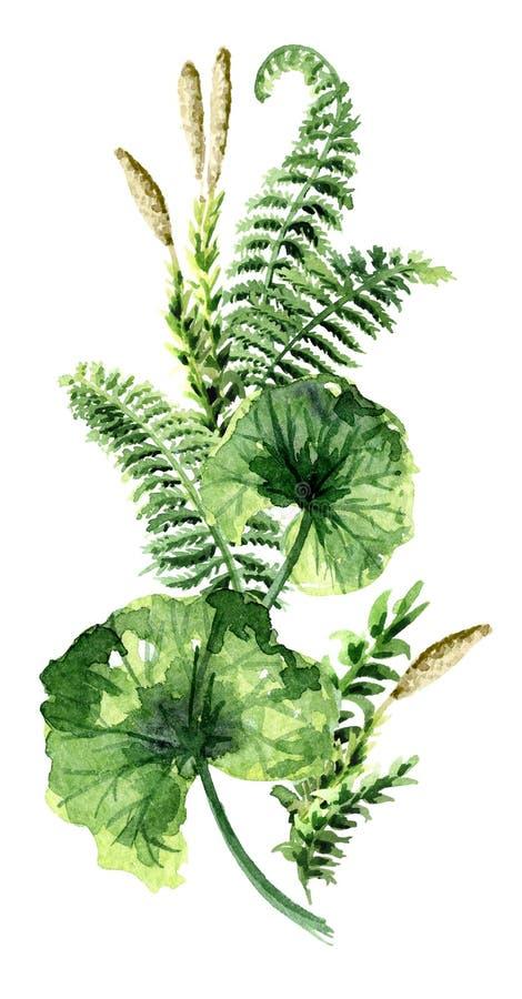 史前植物垂直构成 水彩手拉的例证,隔绝在白色背景 向量例证