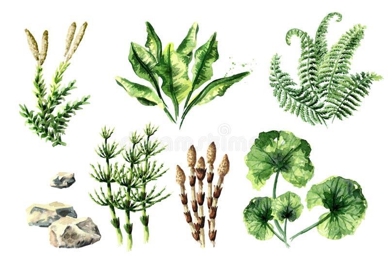 史前植物收藏 水彩手拉的例证,隔绝在白色背景 库存例证