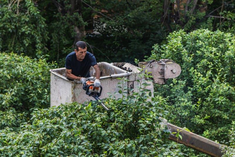 叶卡捷琳堡,斯维尔德洛夫斯克俄罗斯- 07 25 2018年:一件蓝色T恤杉的一个中年人和白色与的手套裁减绿色树 库存图片