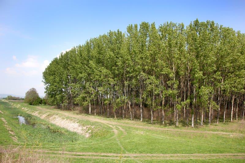 绿叶和自然在塞尔维亚 免版税库存图片