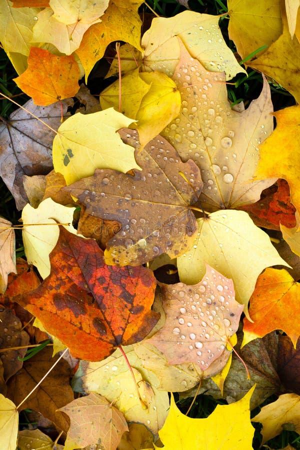 叶子下落的冬天自然地面秋天季节变动露滴 库存照片