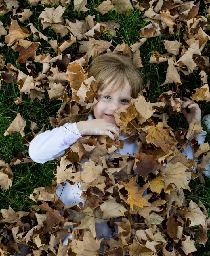 叶子使用 库存图片