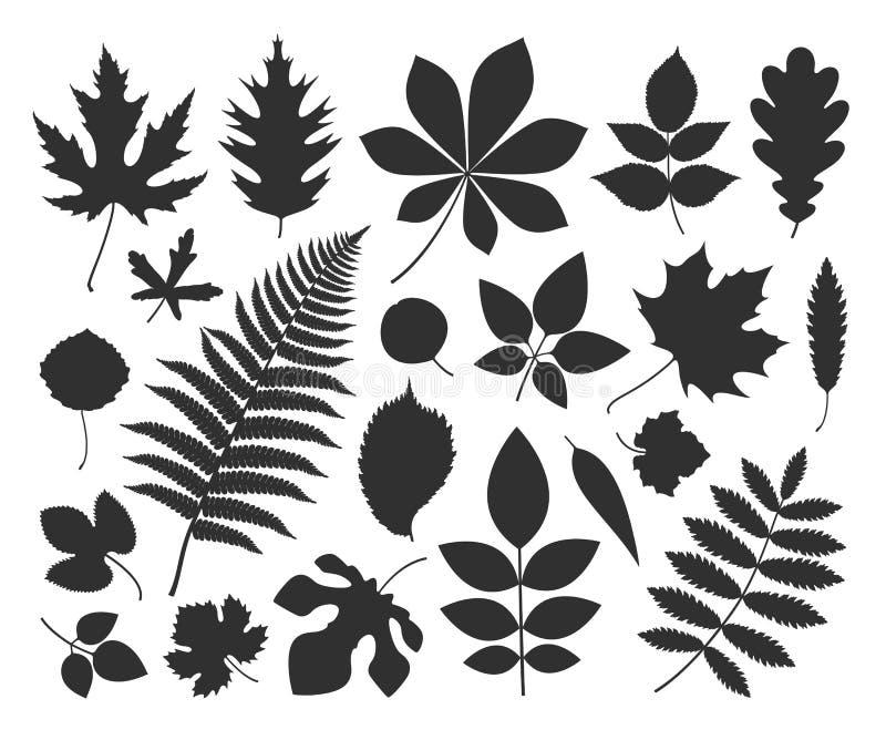 叶子剪影 在白色背景的被隔绝的叶子 向量例证