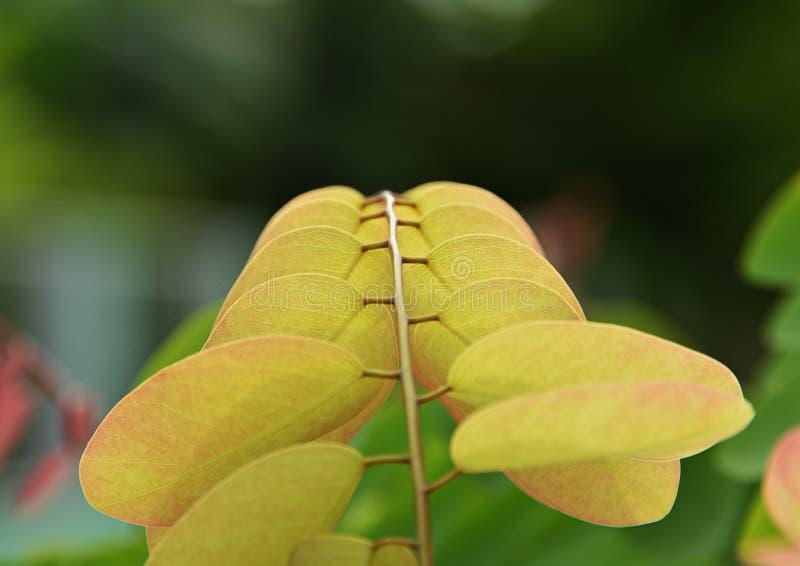 叶子变动颜色在春天 免版税库存照片