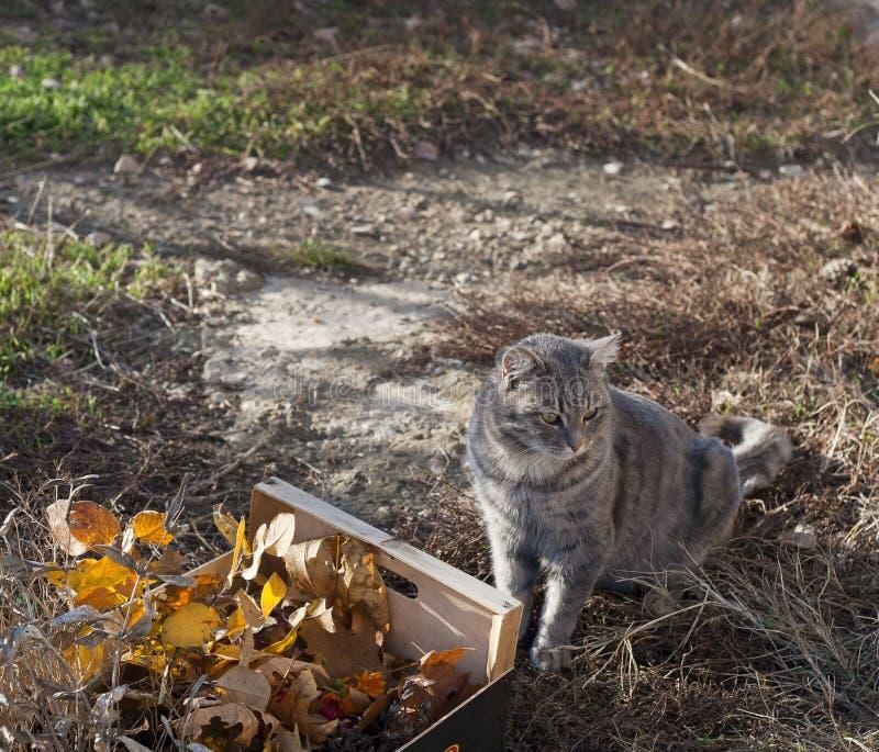 叶子和分支和灰色猫 库存照片