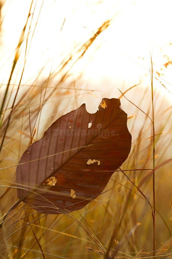 叶子和在日落选择聚焦期间的草地与sha 库存图片